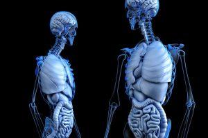 Warto pamiętać, że 80% układu odpornościowego znajduje się w jelitach